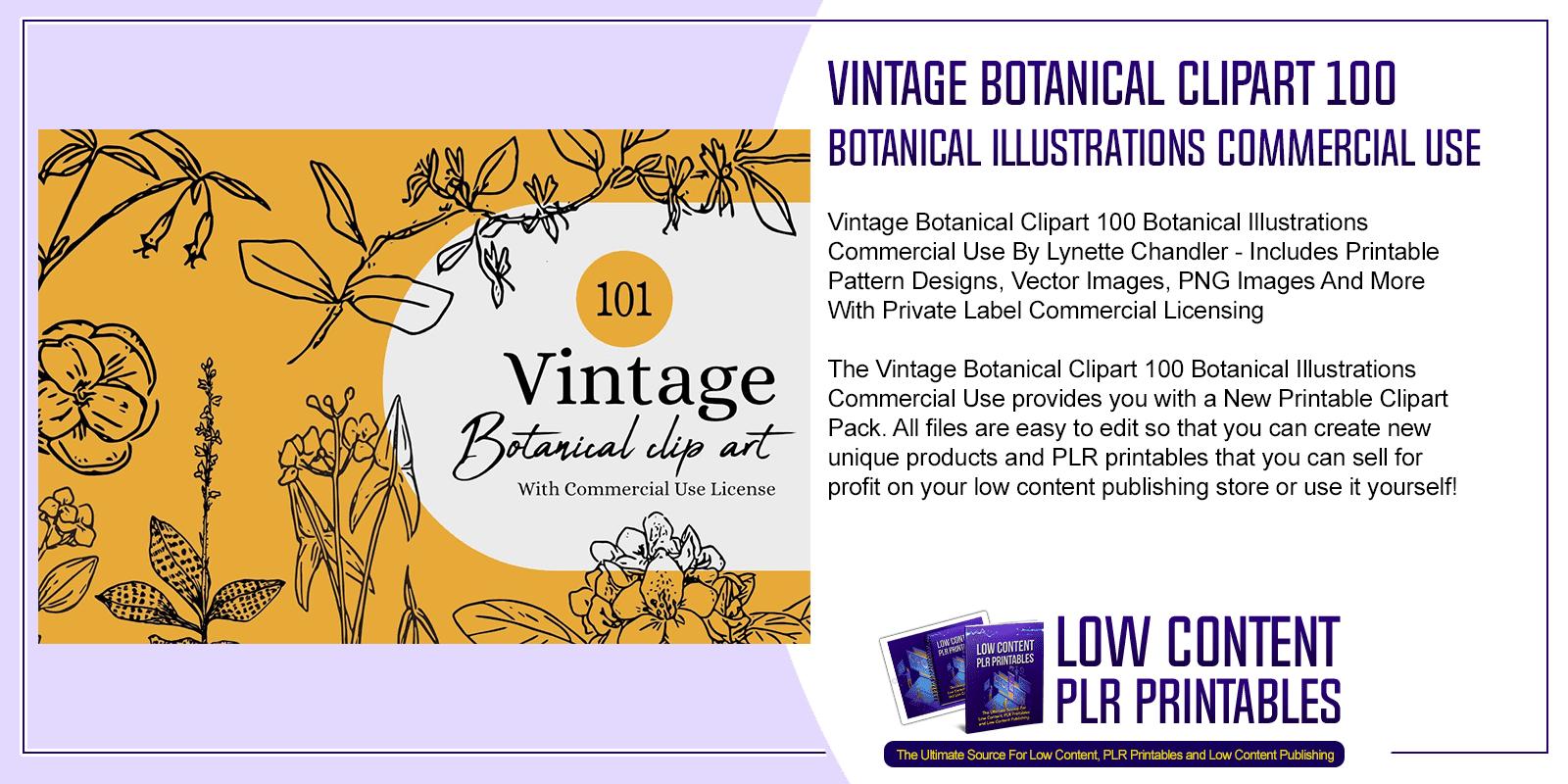 Vintage Botanical Clipart 100 Botanical Illustrations Commercial Use